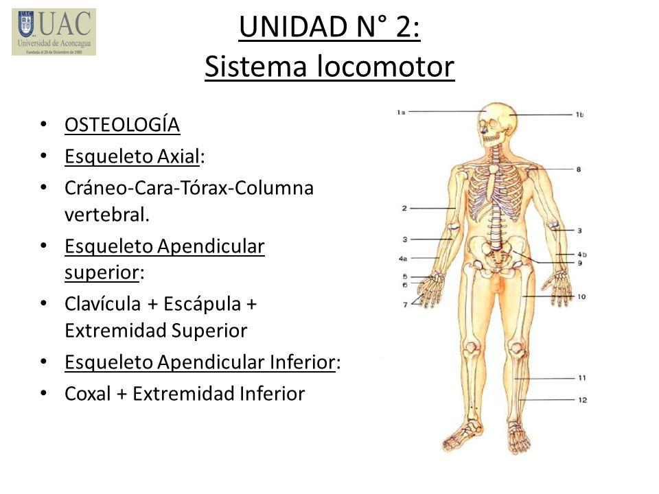 UNIDAD N° 2: Sistema locomotor