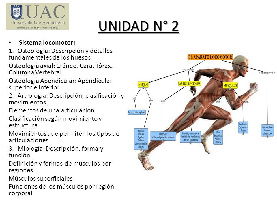 UNIDAD N° 2 Sistema locomotor: