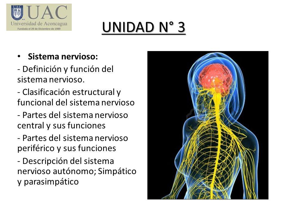 UNIDAD N° 3 Sistema nervioso: