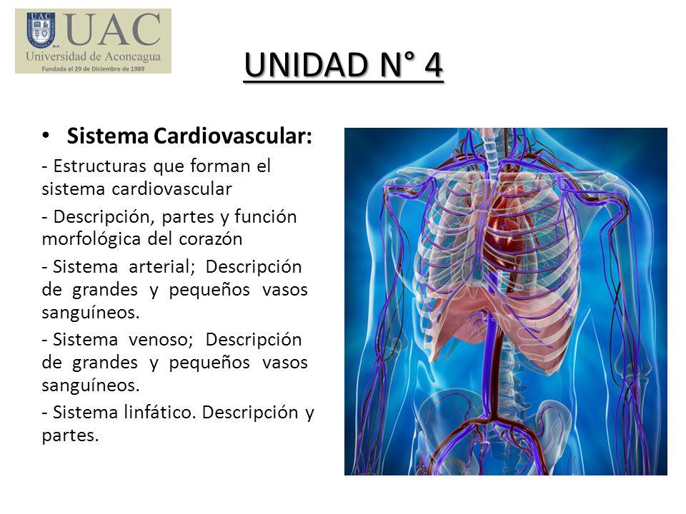 UNIDAD N° 4 Sistema Cardiovascular: