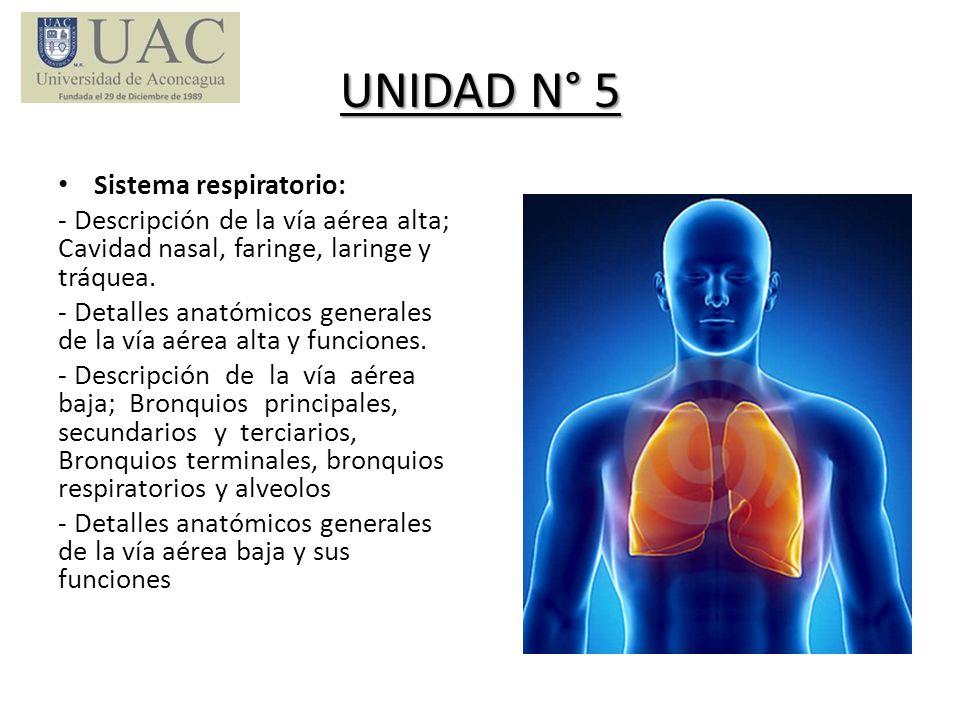 UNIDAD N° 5 Sistema respiratorio: