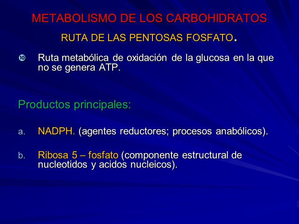 METABOLISMO DE LOS CARBOHIDRATOS RUTA DE LAS PENTOSAS FOSFATO.
