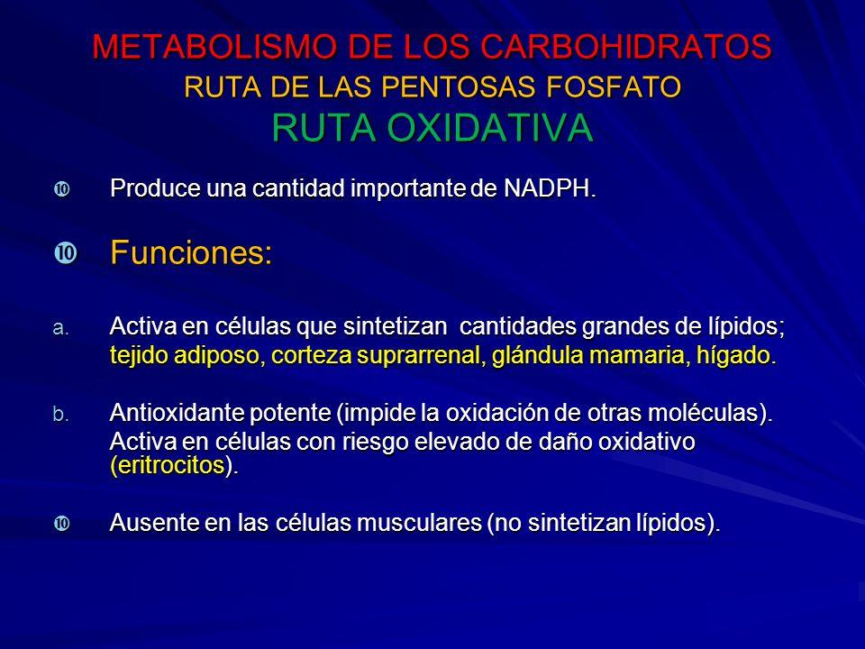 METABOLISMO DE LOS CARBOHIDRATOS RUTA DE LAS PENTOSAS FOSFATO RUTA OXIDATIVA