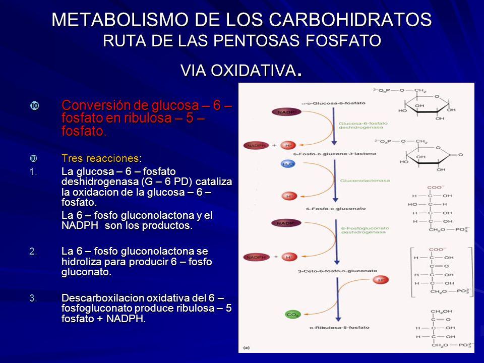 METABOLISMO DE LOS CARBOHIDRATOS RUTA DE LAS PENTOSAS FOSFATO VIA OXIDATIVA.