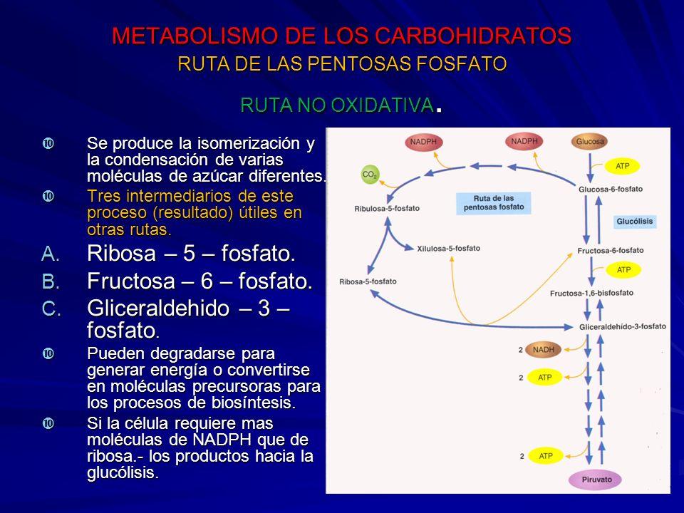 Gliceraldehido – 3 – fosfato.