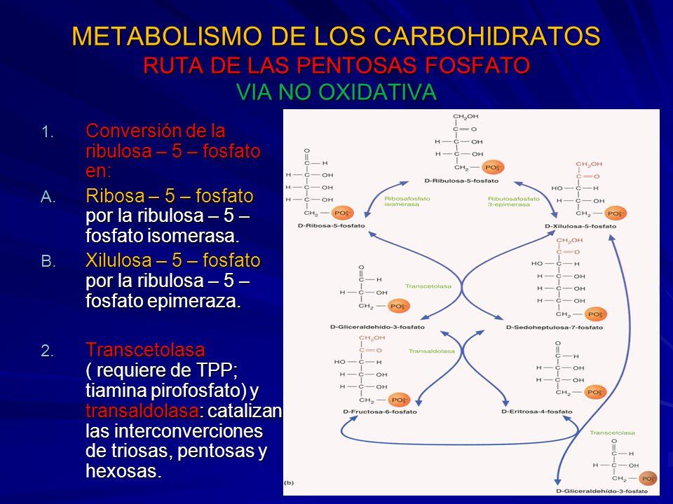 METABOLISMO DE LOS CARBOHIDRATOS RUTA DE LAS PENTOSAS FOSFATO VIA NO OXIDATIVA