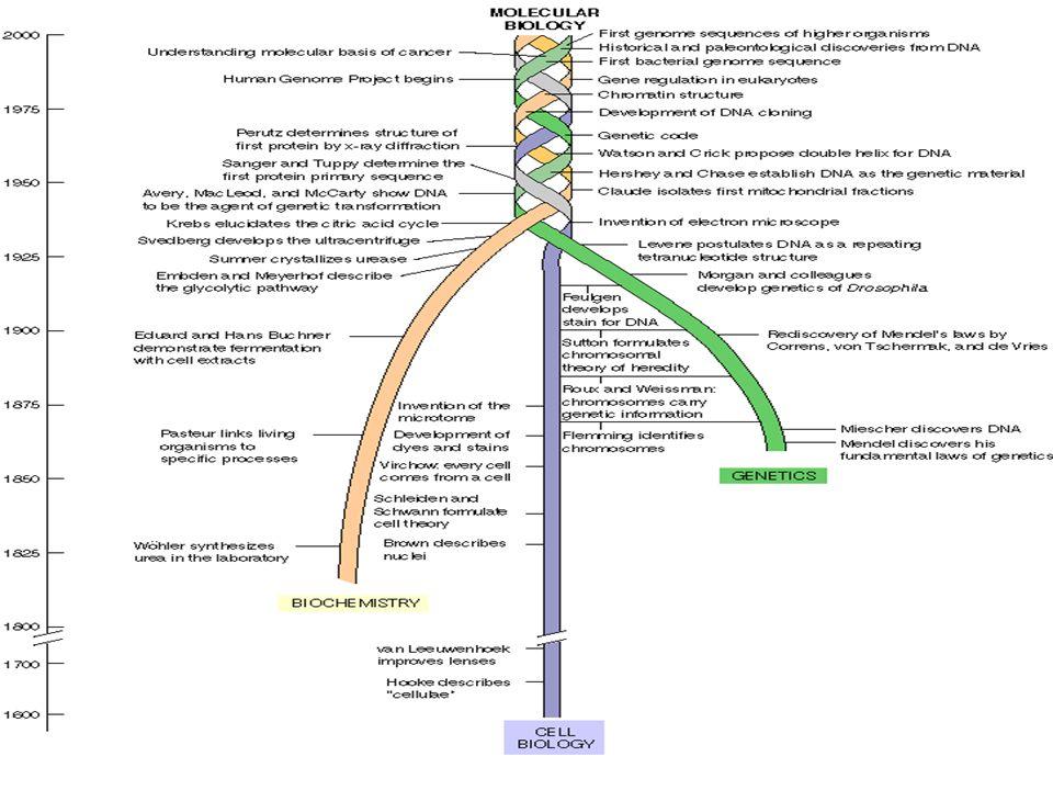 Raíces de la bioquímica