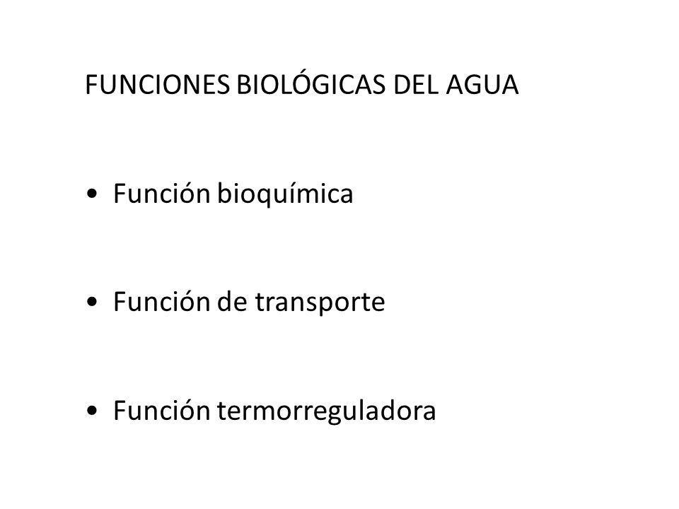 FUNCIONES BIOLÓGICAS DEL AGUA