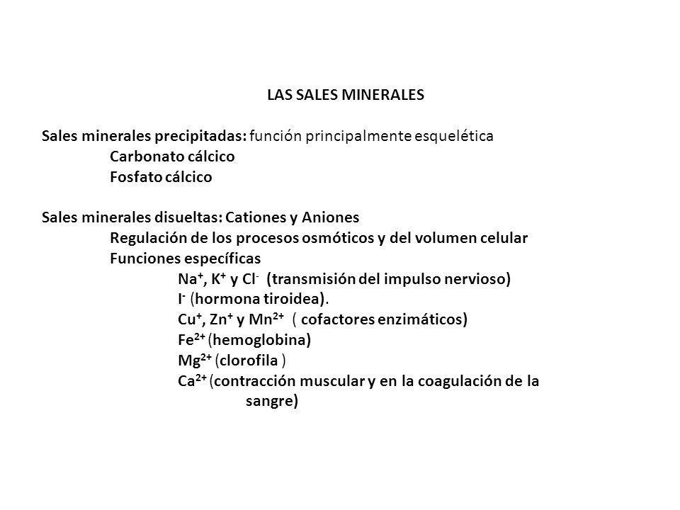 LAS SALES MINERALES Sales minerales precipitadas: función principalmente esquelética. Carbonato cálcico.
