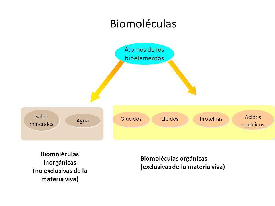 Biomoléculas inorgánicas (no exclusivas de la materia viva)