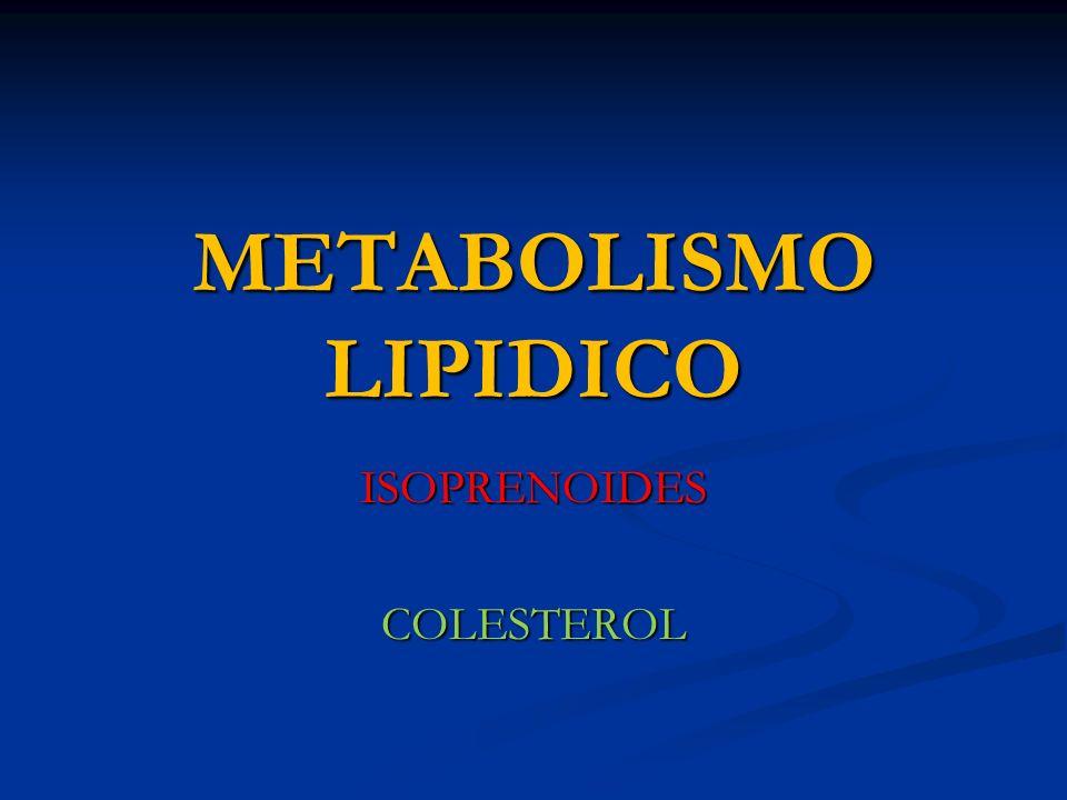 ISOPRENOIDES COLESTEROL