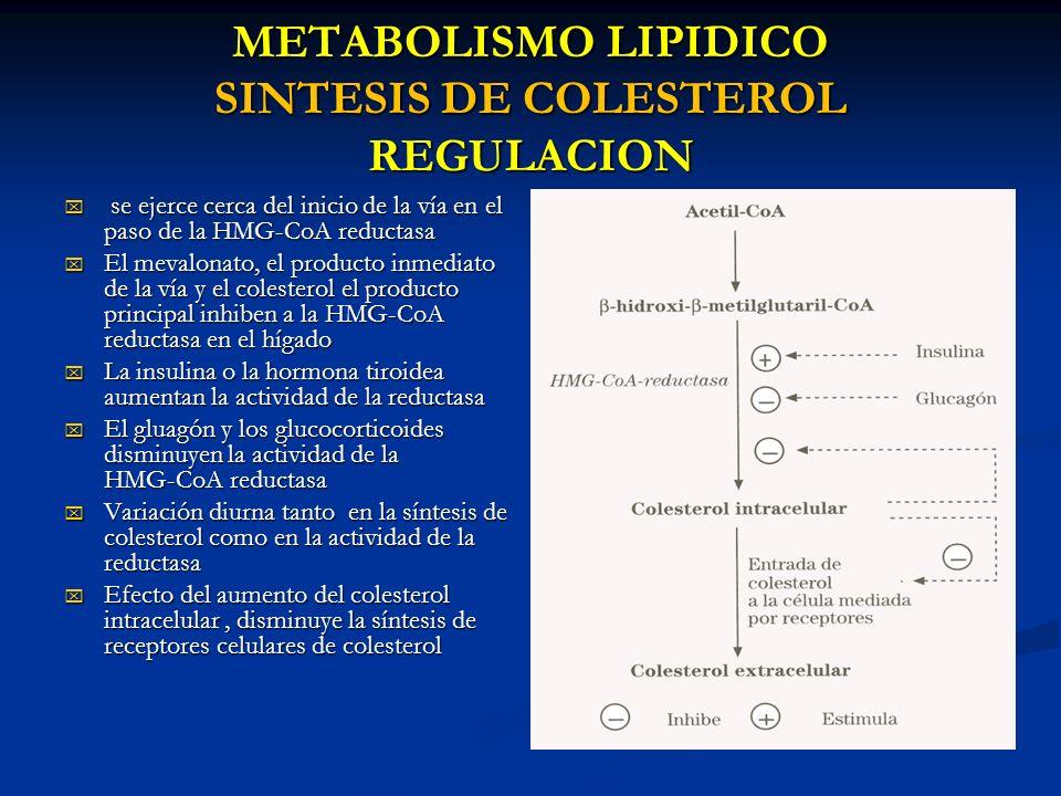 METABOLISMO LIPIDICO SINTESIS DE COLESTEROL REGULACION