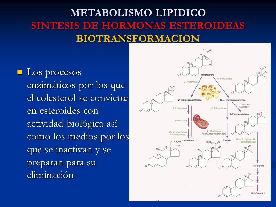 METABOLISMO LIPIDICO SINTESIS DE HORMONAS ESTEROIDEAS BIOTRANSFORMACION