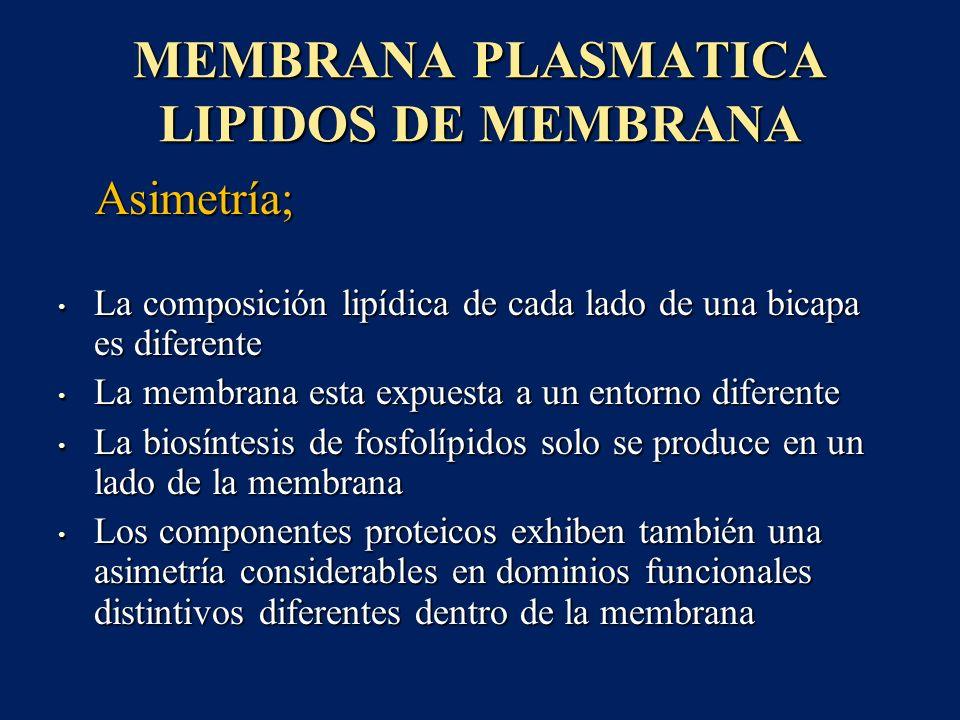 MEMBRANA PLASMATICA LIPIDOS DE MEMBRANA