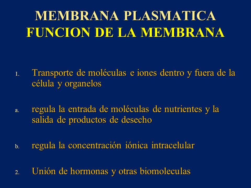 MEMBRANA PLASMATICA FUNCION DE LA MEMBRANA