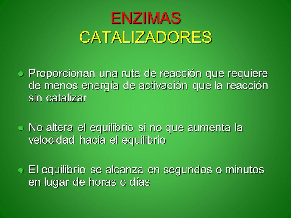 ENZIMAS CATALIZADORES