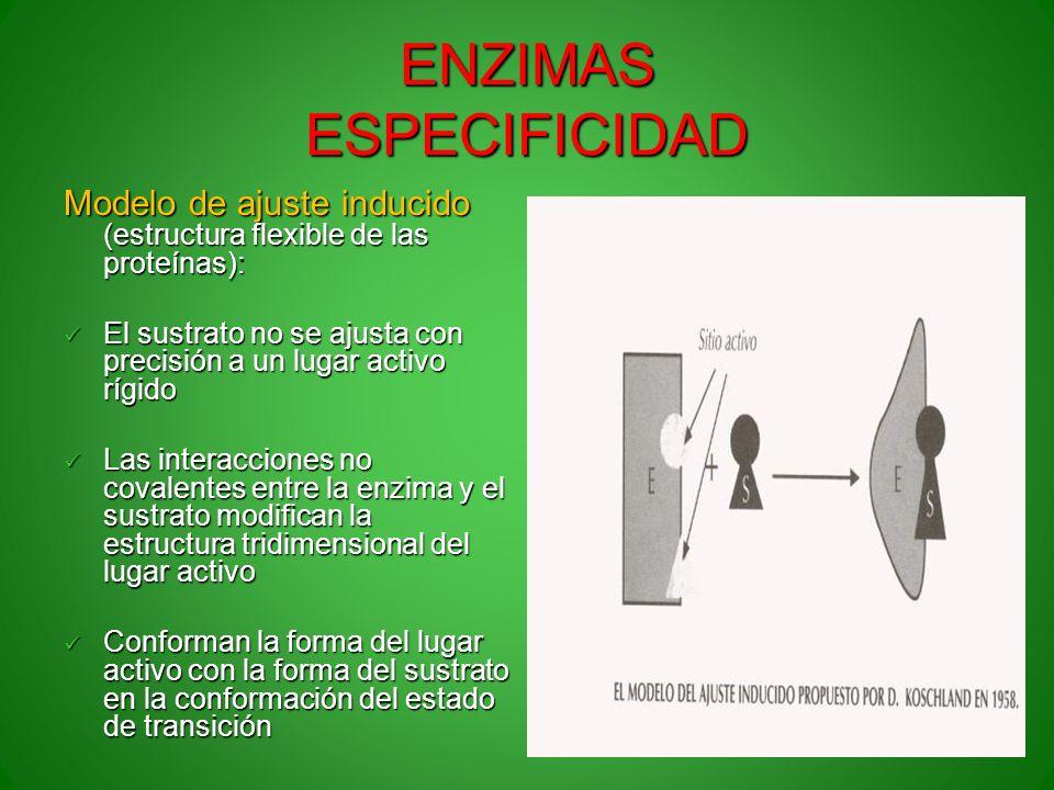 ENZIMAS ESPECIFICIDAD