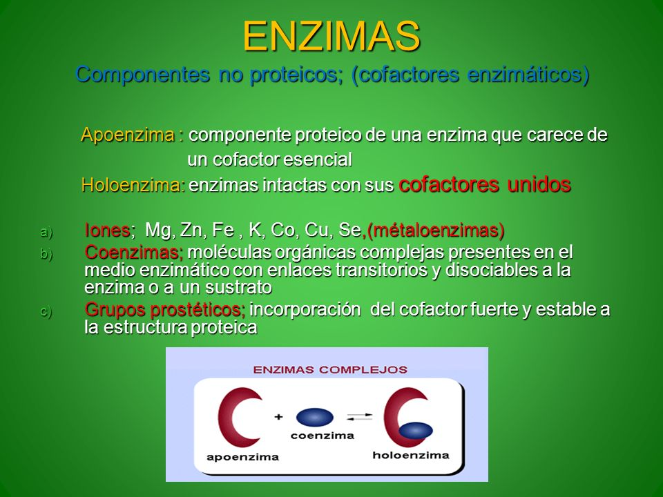ENZIMAS Componentes no proteicos; (cofactores enzimáticos)