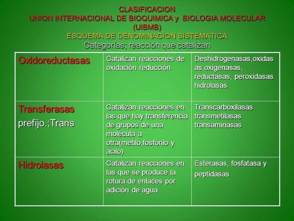 Oxidoreductasas Transferasas prefijo.;Trans Hidrolasas