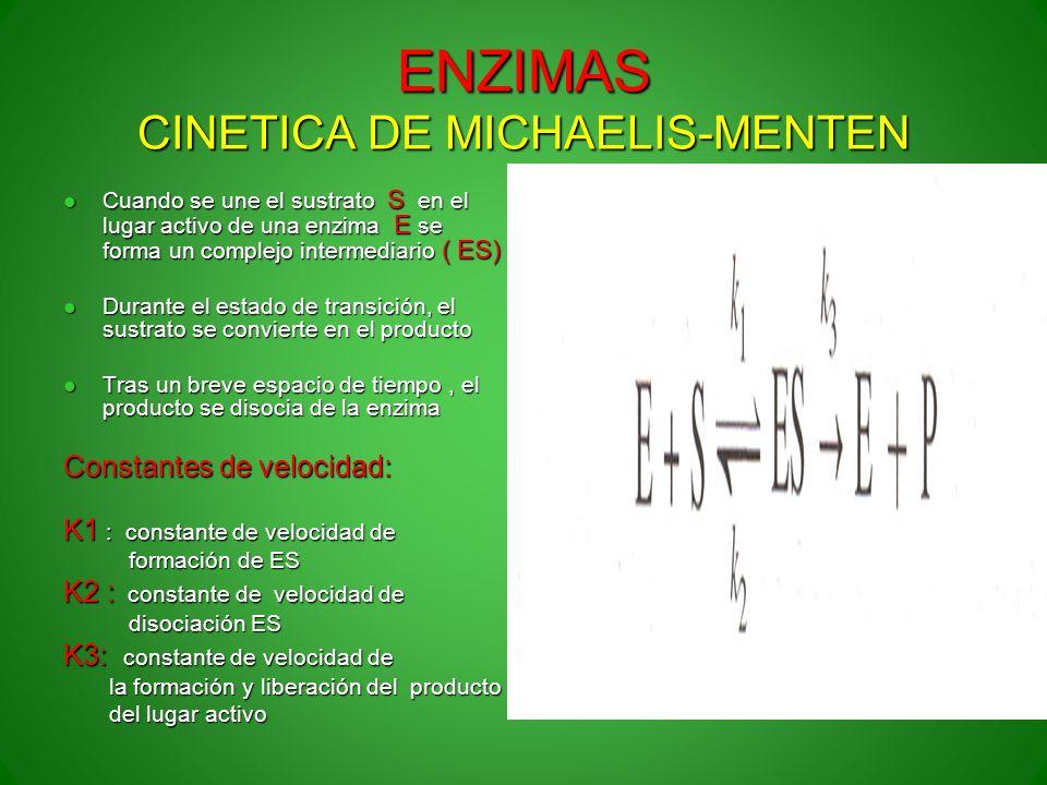 ENZIMAS CINETICA DE MICHAELIS-MENTEN