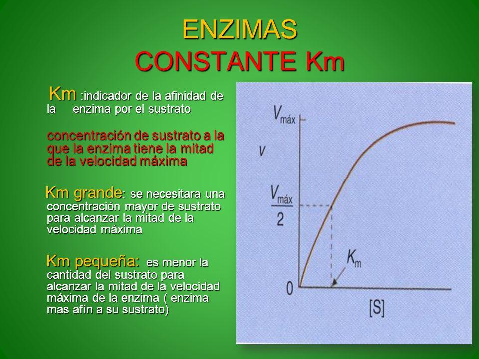 ENZIMAS CONSTANTE Km Km :indicador de la afinidad de la enzima por el sustrato.