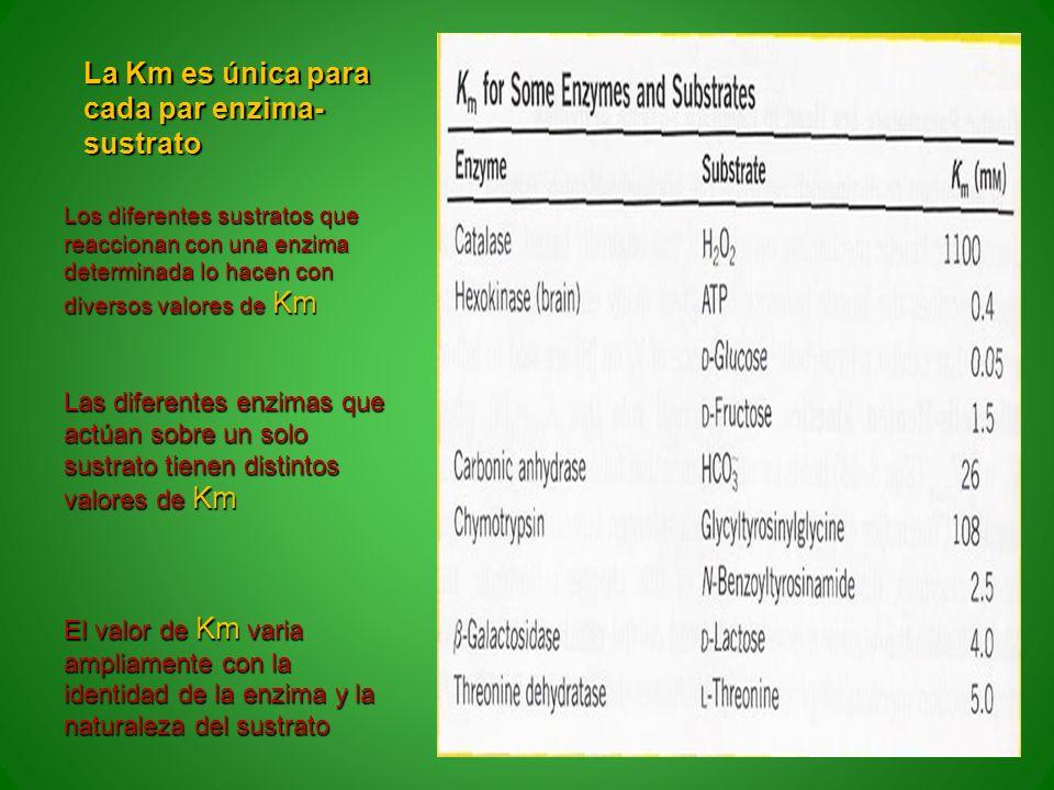 La Km es única para cada par enzima-sustrato