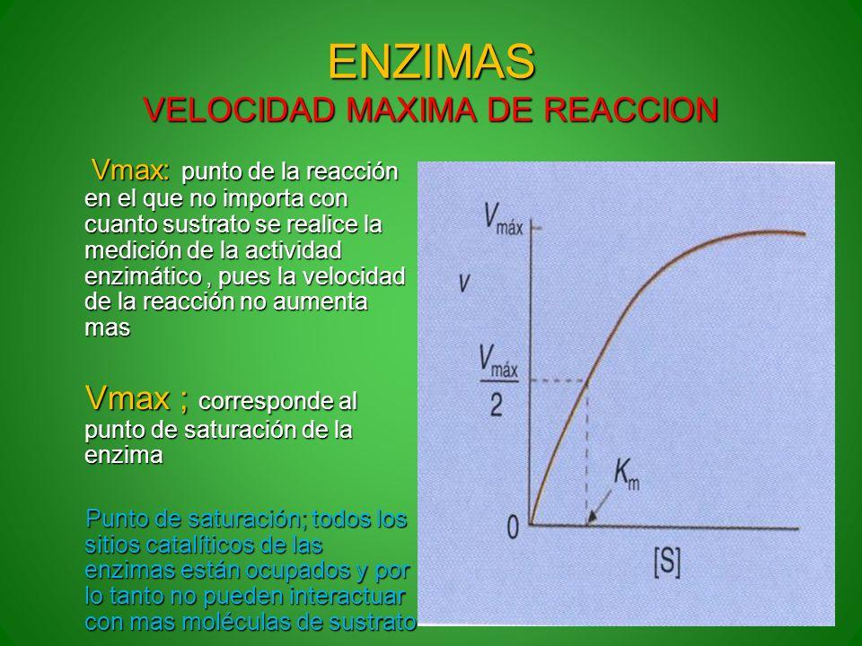 ENZIMAS VELOCIDAD MAXIMA DE REACCION