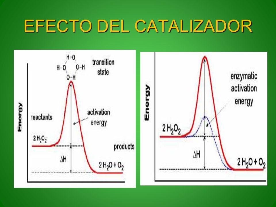 EFECTO DEL CATALIZADOR