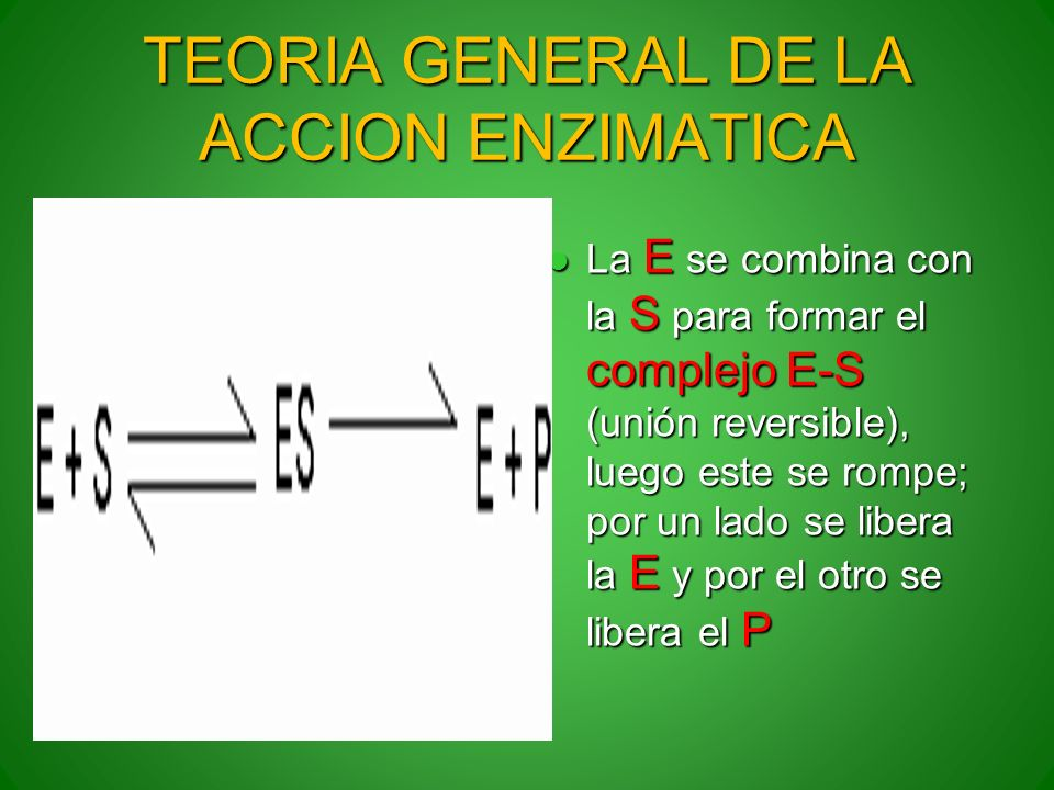 TEORIA GENERAL DE LA ACCION ENZIMATICA