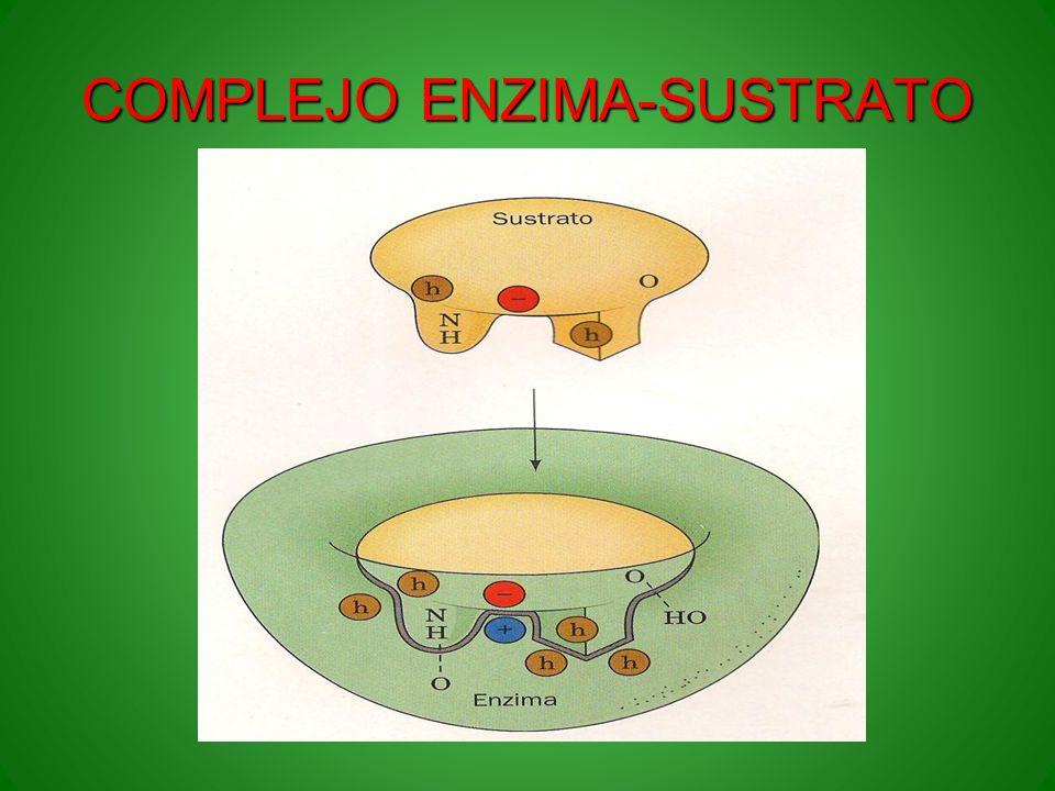COMPLEJO ENZIMA-SUSTRATO