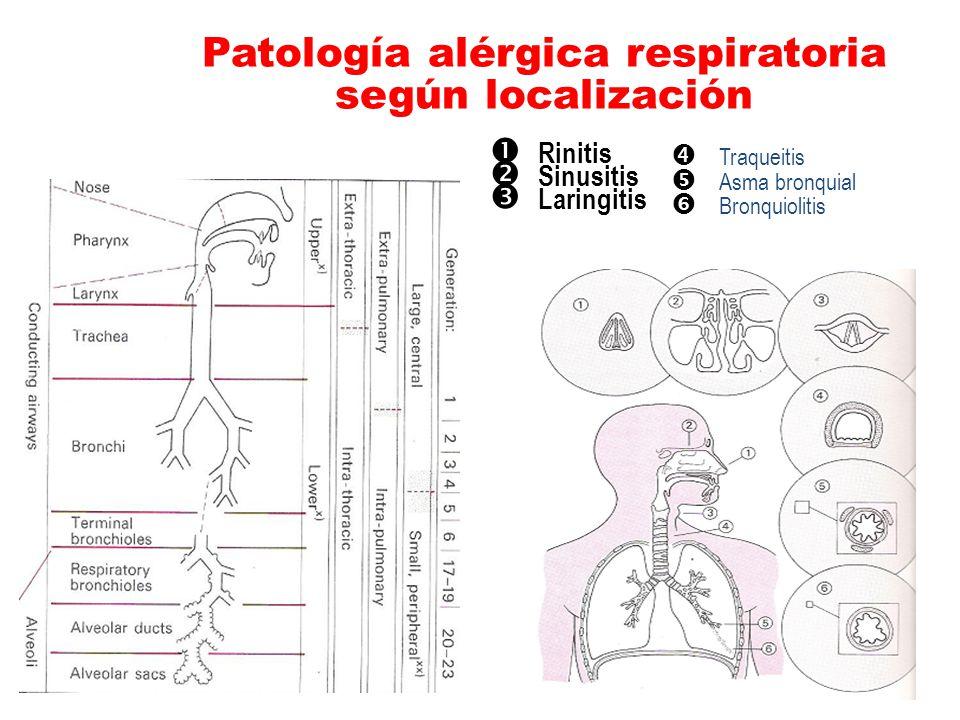 Patología alérgica respiratoria según localización
