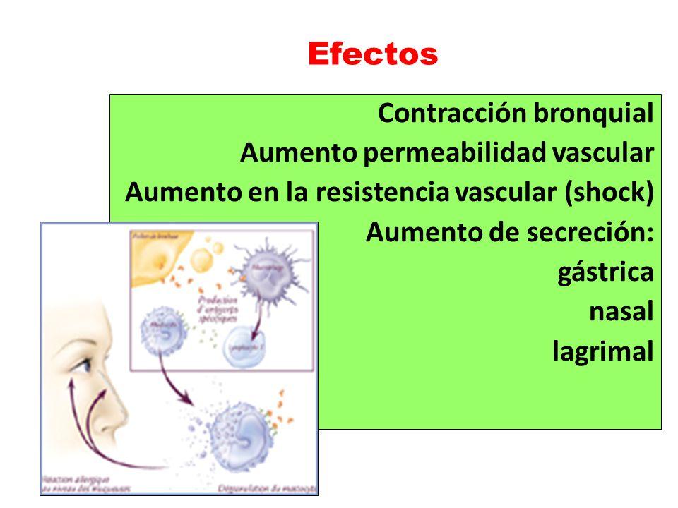 Efectos Contracción bronquial Aumento permeabilidad vascular