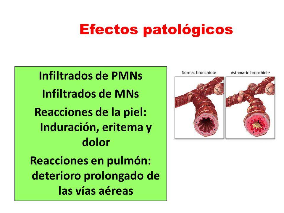 Efectos patológicos Infiltrados de PMNs Infiltrados de MNs