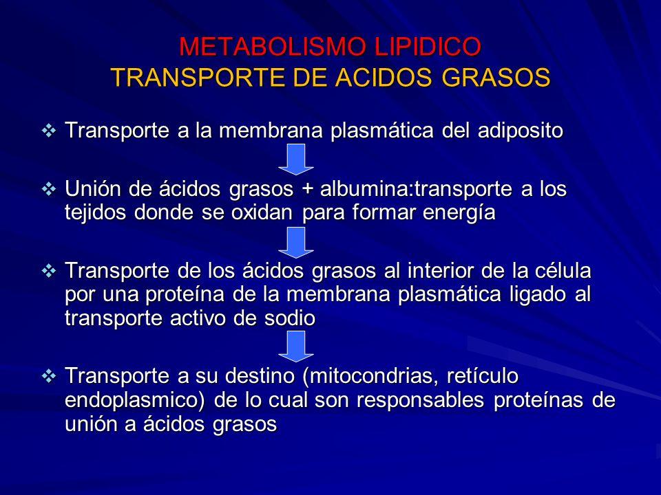 METABOLISMO LIPIDICO TRANSPORTE DE ACIDOS GRASOS