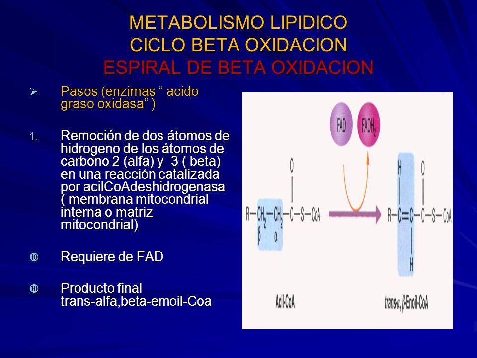 METABOLISMO LIPIDICO CICLO BETA OXIDACION ESPIRAL DE BETA OXIDACION