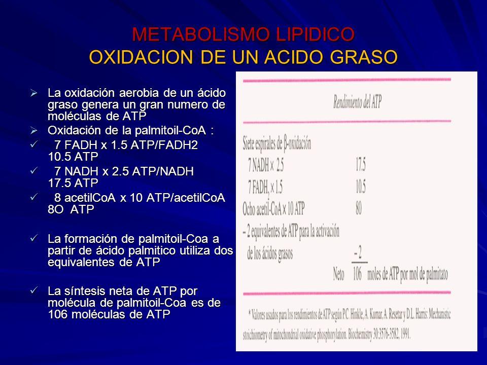 METABOLISMO LIPIDICO OXIDACION DE UN ACIDO GRASO