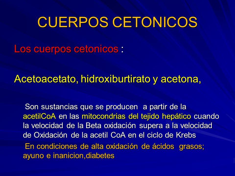CUERPOS CETONICOS Los cuerpos cetonicos :