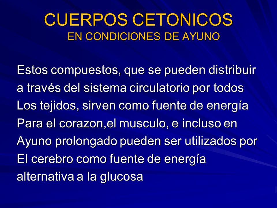 CUERPOS CETONICOS EN CONDICIONES DE AYUNO