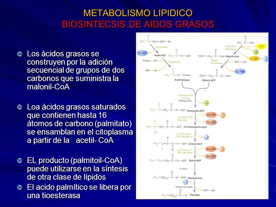 METABOLISMO LIPIDICO BIOSINTECSIS DE AIDOS GRASOS
