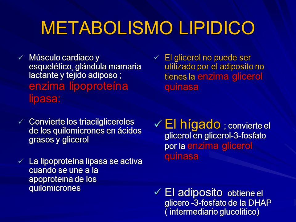 METABOLISMO LIPIDICO Músculo cardiaco y esquelético, glándula mamaria lactante y tejido adiposo ; enzima lipoproteína lipasa: