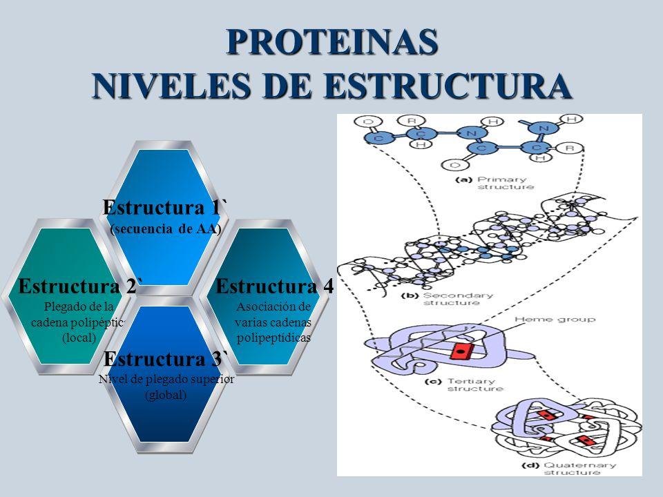 PROTEINAS NIVELES DE ESTRUCTURA