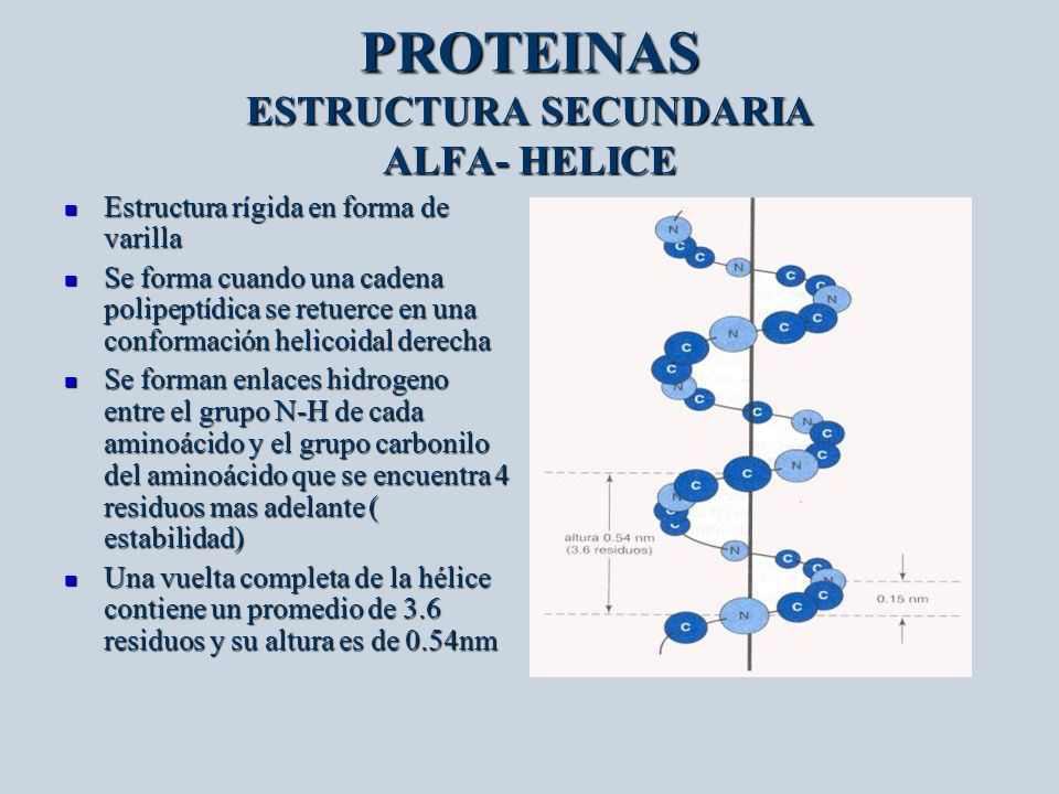 PROTEINAS ESTRUCTURA SECUNDARIA ALFA- HELICE