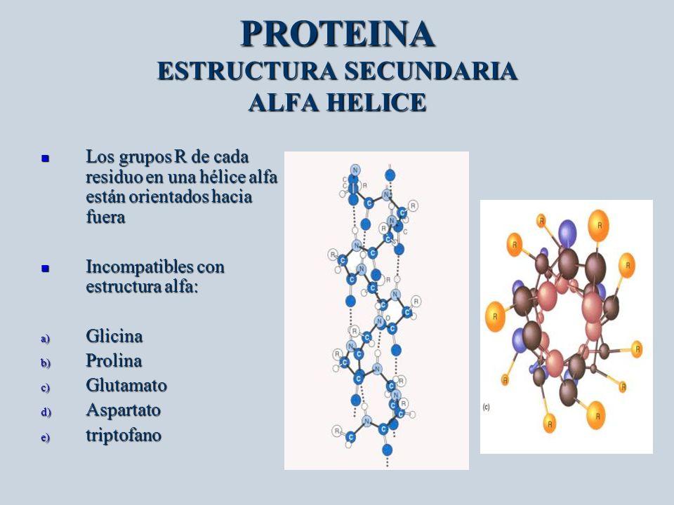 PROTEINA ESTRUCTURA SECUNDARIA ALFA HELICE