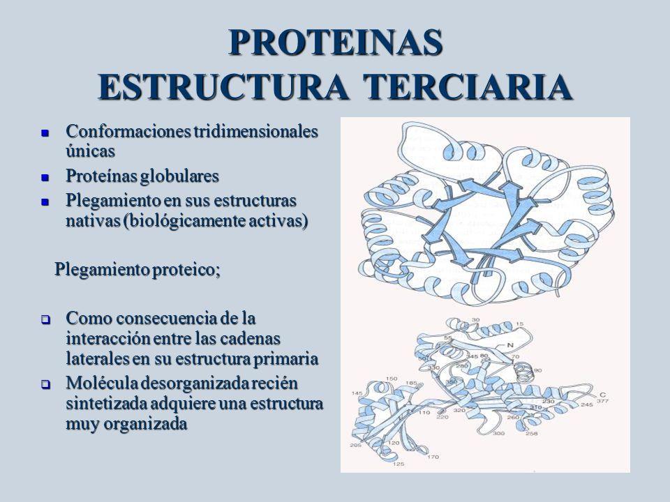 PROTEINAS ESTRUCTURA TERCIARIA