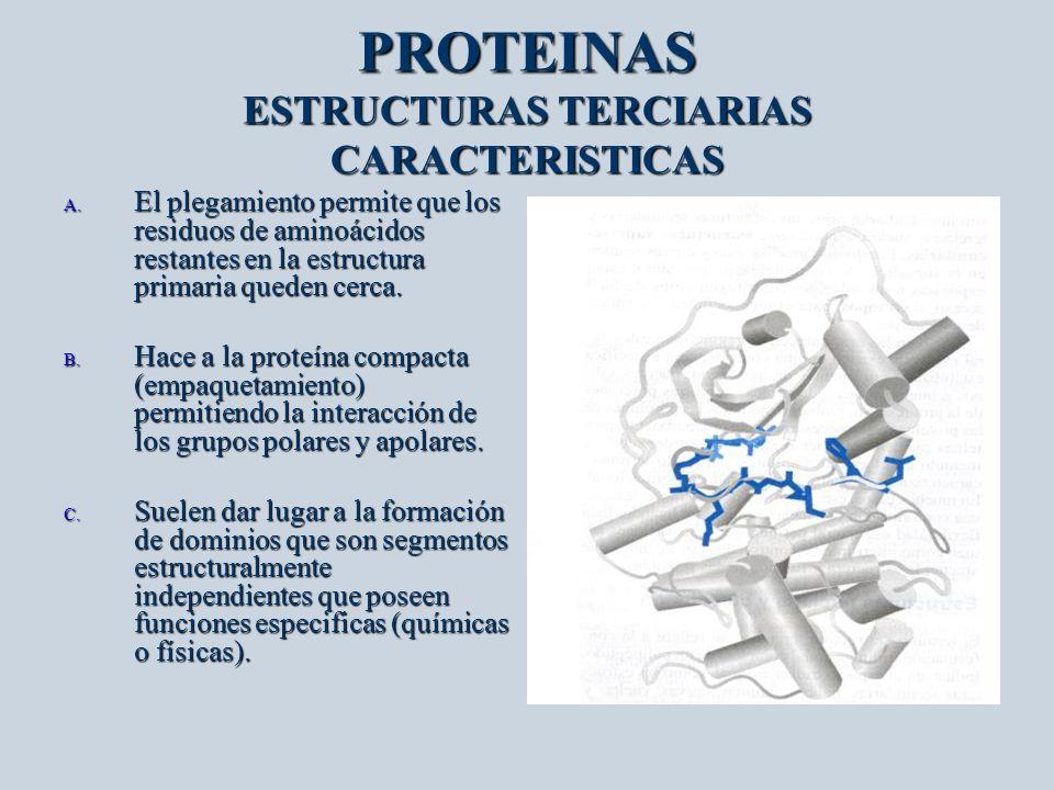 PROTEINAS ESTRUCTURAS TERCIARIAS CARACTERISTICAS