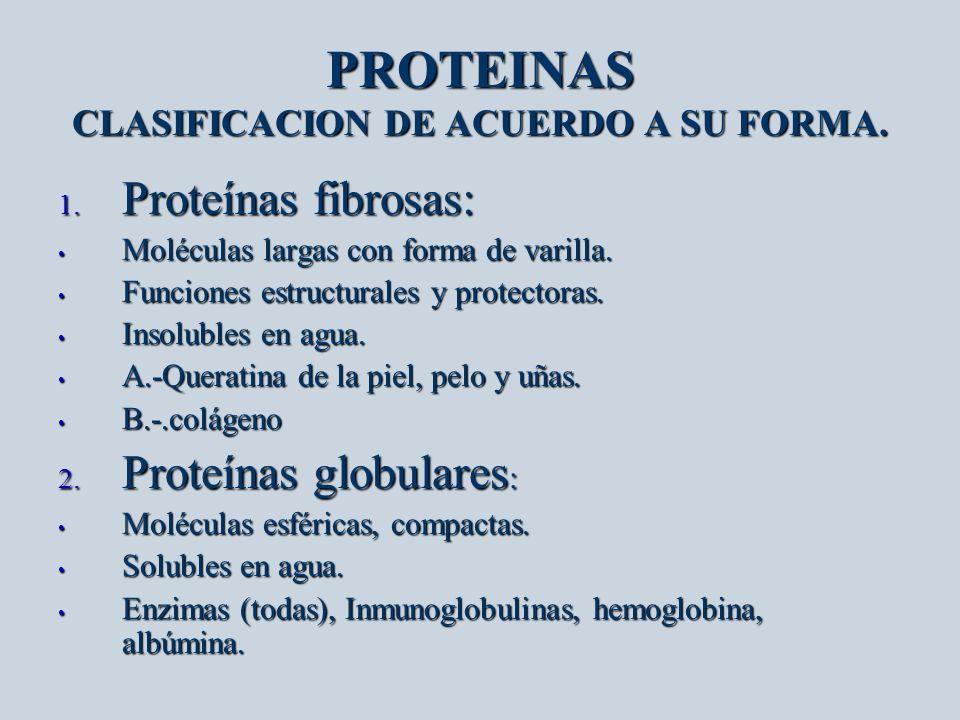 PROTEINAS CLASIFICACION DE ACUERDO A SU FORMA.