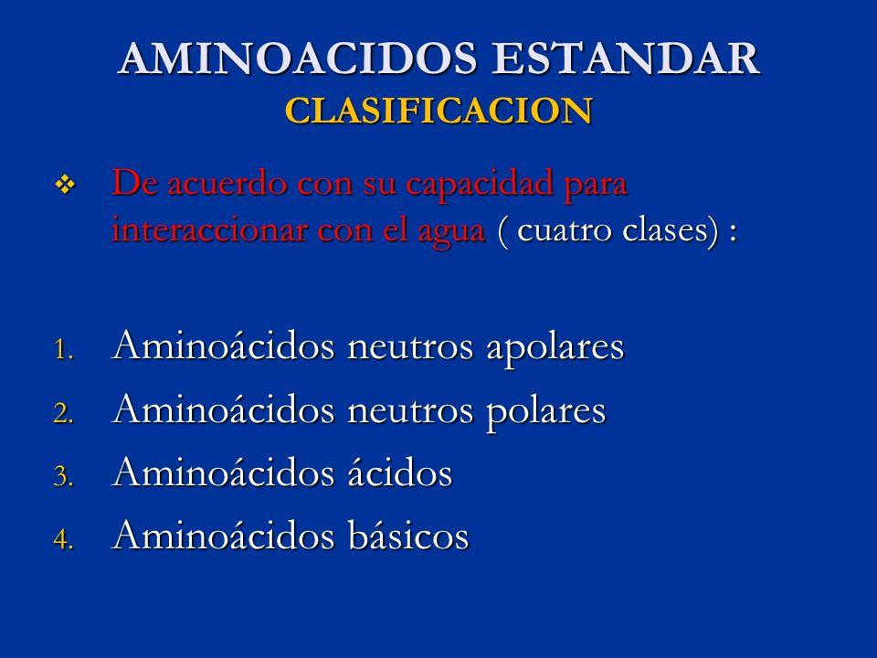 AMINOACIDOS ESTANDAR CLASIFICACION