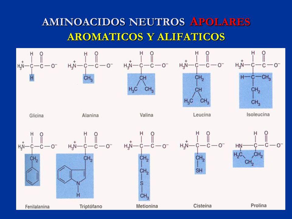 AMINOACIDOS NEUTROS APOLARES AROMATICOS Y ALIFATICOS