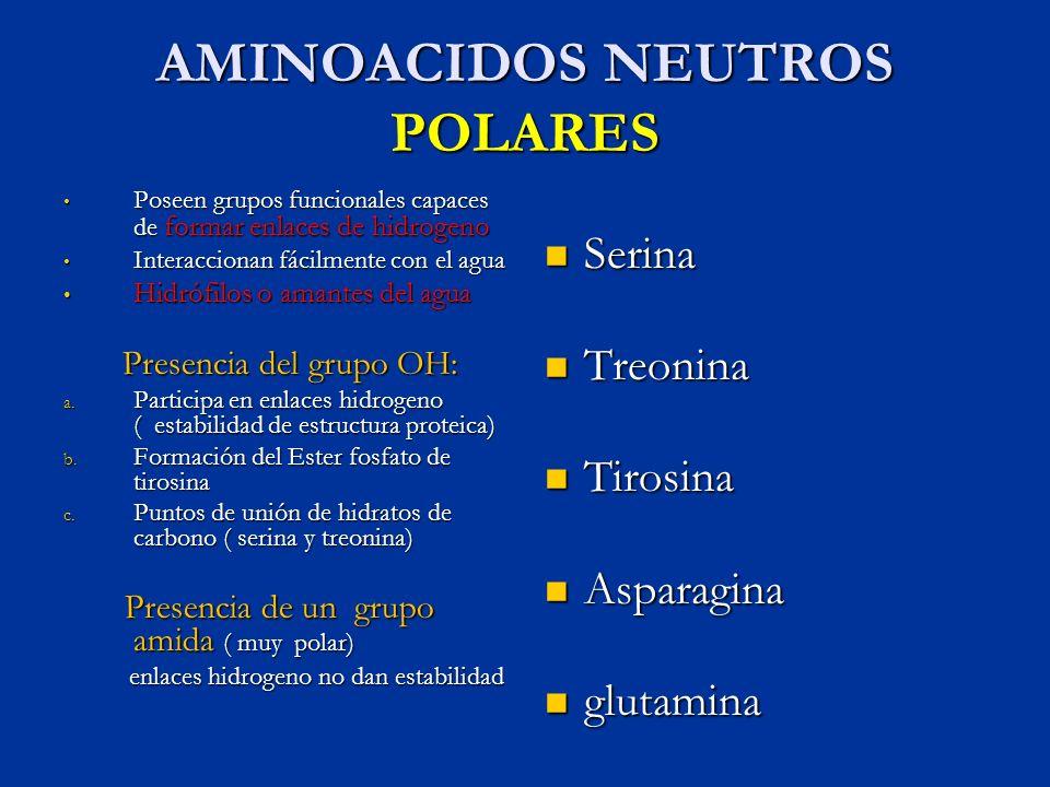 AMINOACIDOS NEUTROS POLARES