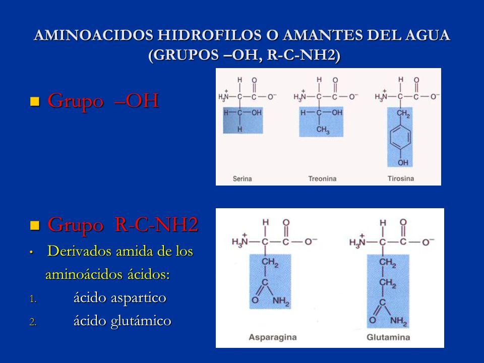 AMINOACIDOS HIDROFILOS O AMANTES DEL AGUA (GRUPOS –OH, R-C-NH2)